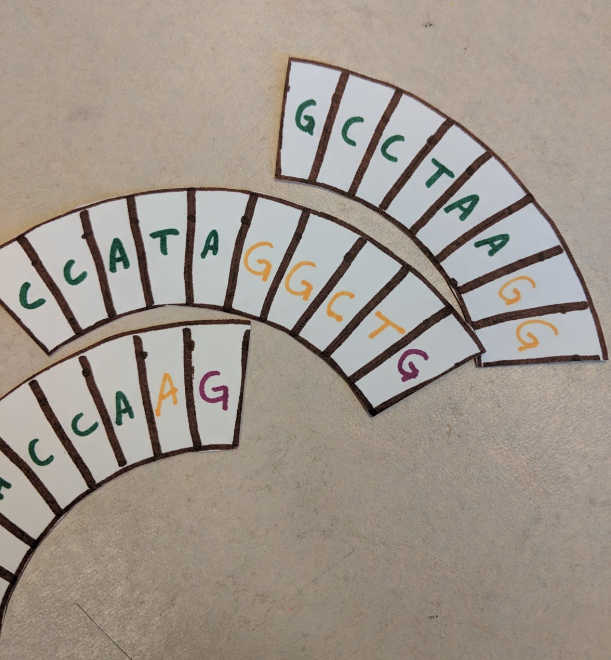 paper cutouts showing genomic letters A, G, T, and C.